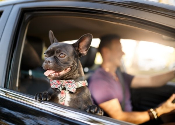 Man Driving with Dog_Financial Article_600x429